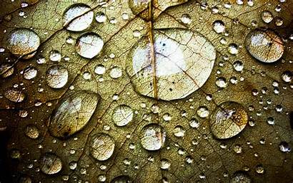 Water Wallpapers Drop Drops Droplets Leaf Pc