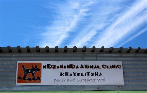 Meet Khayelitshas Adorable Pets Groundup