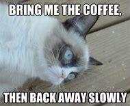 Grumpy Cat Meme Sleep