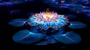 Lotus, Flower, Digital, Art, 4k, Hd, Artist, 4k, Wallpapers, Images, Backgrounds, Photos, And, Pictures