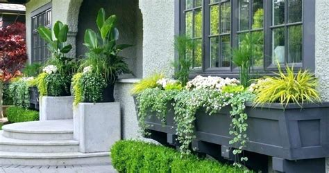 Window Potted Plants by Pot Plant Garden Ideas Front Door Potted Plant Ideas Front
