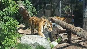Assiniboine Park Zoo  Winnipeg