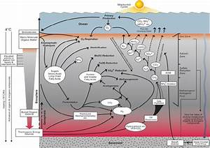 Schematic Deep Biosphere Diagram