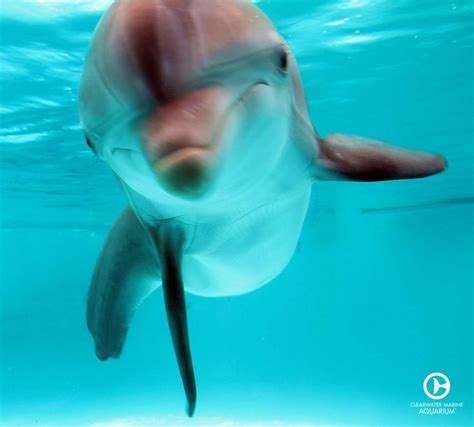 winter  dolphin images  pinterest
