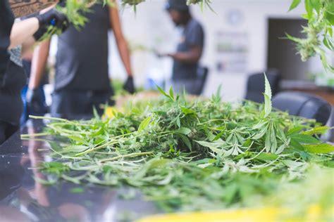 marijuana addiction discovery mood