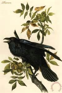 John James Audubon Raven