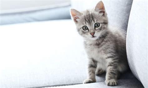 Esto es lo que dicen los gestos y sonidos de tu gato - Foto 1