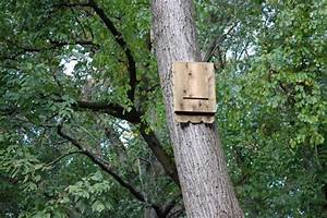 How to Build a Bat House how-tos DIY