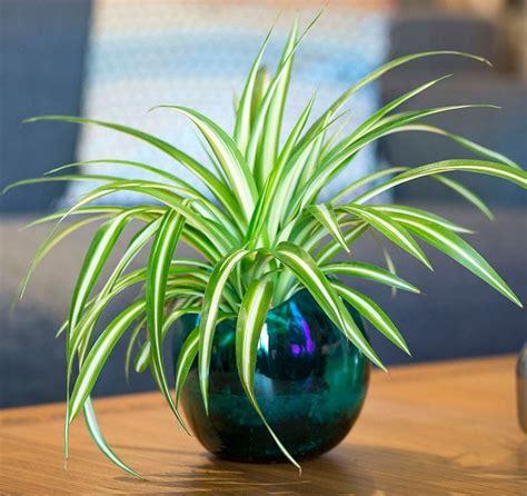 plantes verts d interieur plantes vertes d int 233 rieur pour d 233 corer la table 224 caf 233
