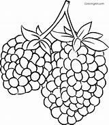 Coloring Blackberry Coloringall Printable Gozdarske Any Fruit Jeklene Vrvi Kindergarten sketch template