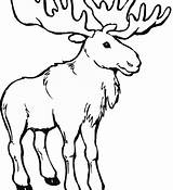 Moose Coloring Clipart Cartoon Colouring Transparent Printable Clip Coloringhome Template Popular Jing Fm Drawing sketch template