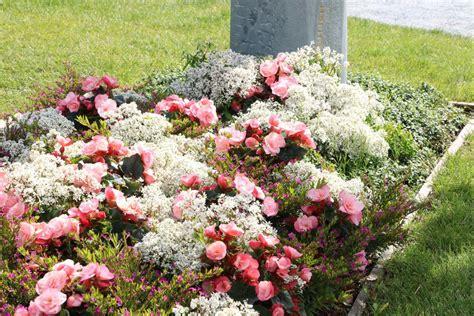 Welche Blumen Vertragen Viel Sonne by Welche Balkonblumen Vertragen Viel Sonne Zaubergl Ckchen