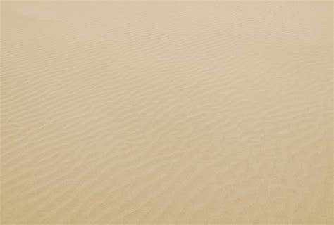 plant  sand desert  texture