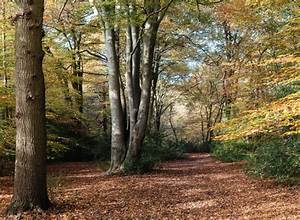 A Walk in the Woods: 7 of the World's Most Haunted Forests ...