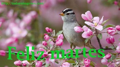feliz martes para ti Fondos de pantalla de primavera