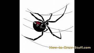How to Draw a Black Widow Spider Step By Step - YouTube
