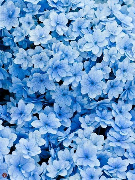 pin on blue aesthetic inspiration board