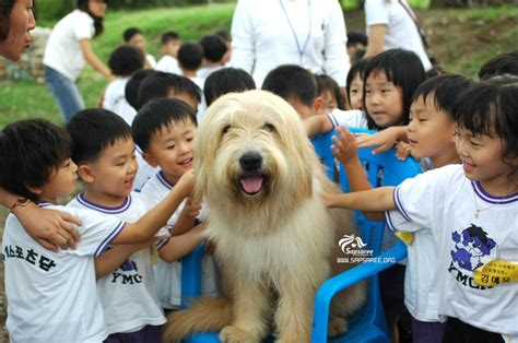 sapsari images  pinterest korean animais