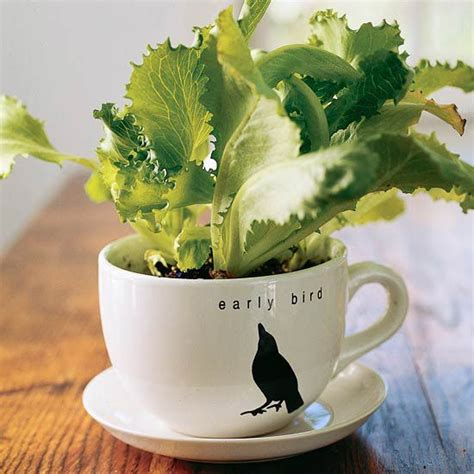21 Best Images About Lettuce Container Garden On Pinterest