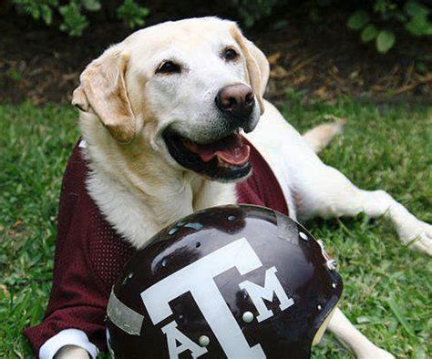 30 College Mascot Names for Your Dog
