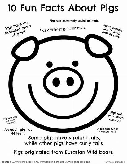 Facts Fun Pigs Coloring Pages Pig Printable