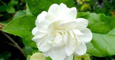 mogra flower  green leaf artline feel  creation