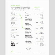 Classifying Animals  Worksheet Educationcom