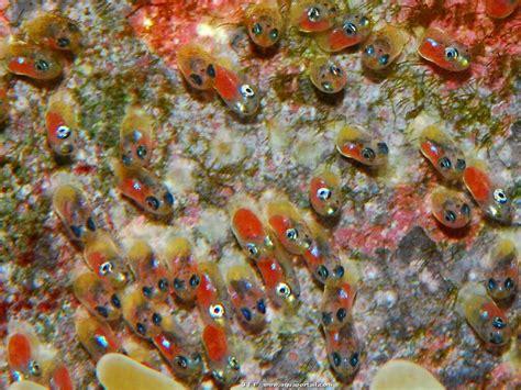 oeuf de poisson d aquarium oeuf d 233 finition et explications