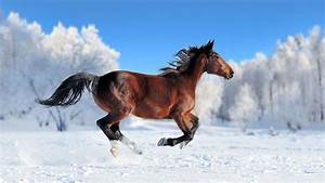Wallpaper, Horse, Cute, Animals, Snow, Winter, 4k, Animals