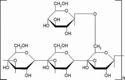 Polysaccharide Structure Bleomycin Chemical Polyporus Frontiersin Fibrosis