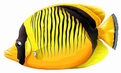 Fish Clipart Butterfly Yellow Realistic Poissons Transparent