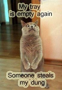 Funny Cat Pictures with Captions - I AM BORED