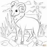 Coloring Ram Printable sketch template