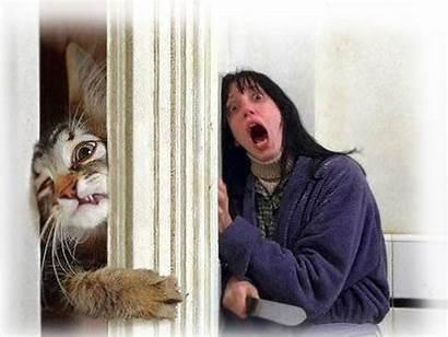 Cat Humor Johnny Funny Shining Jokes Adult