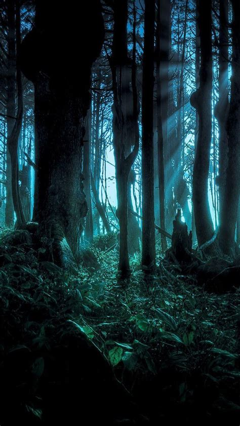creepy forest wallpaper  wallpapersafari