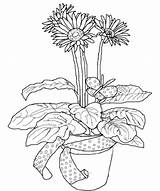 Daisy Coloring Flower Pottery Pages sketch template