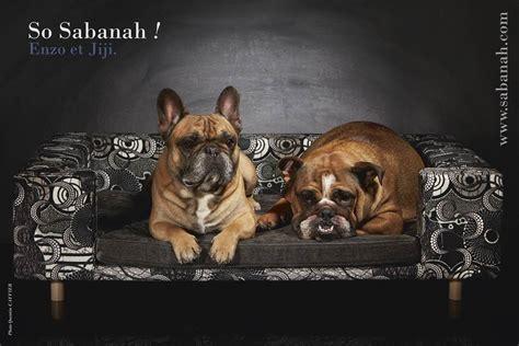 canapé chien canape pour chien de luxe le couture gris
