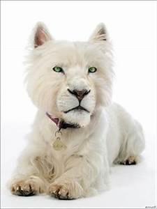 Animal Refs - Chimaeras on Pinterest | 67 Pins