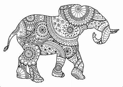 Elephant Patterns Zentangle Paisley Coloring Elephants Shape