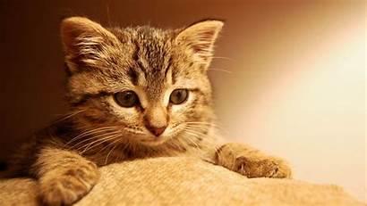 Cat Cats Wallpapers Wallpapersafari