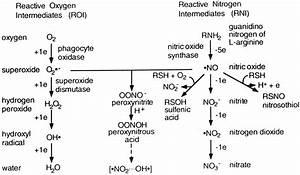 Reactive Oxygen And Nitrogen Intermediates In The Relationship Between Mammalian Hosts And