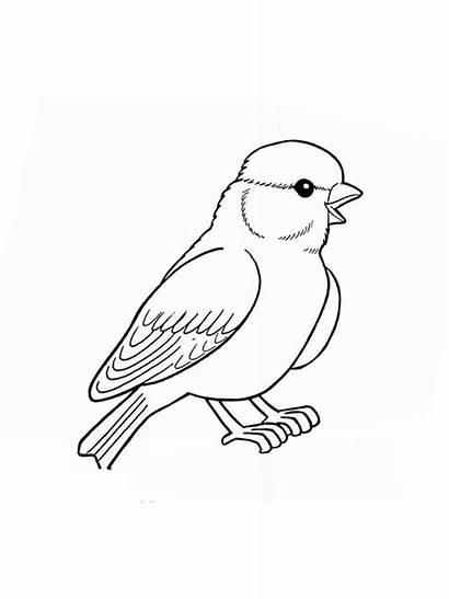 Coloring Sparrow Pages Birds Sparrows Printable Colors