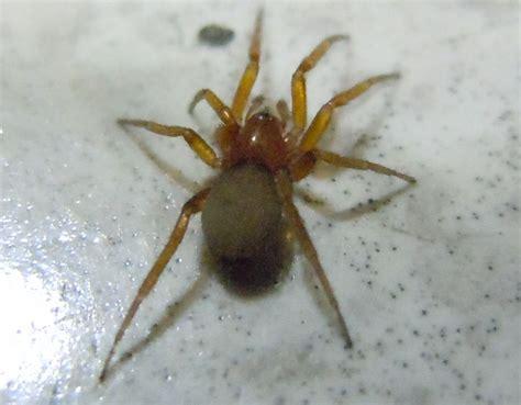 ragno in casa ragno in casa forum natura mediterraneo forum