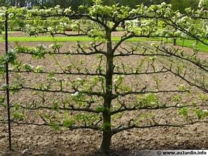 Quand Planter Un Pommier : planter un fruitier ~ Dallasstarsshop.com Idées de Décoration