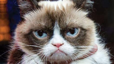 grumpy cat image gallery   meme