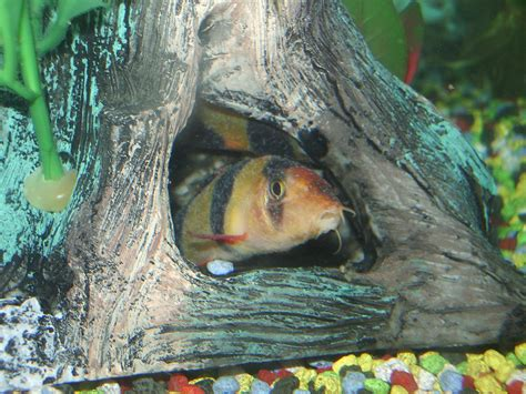 common freshwater fish diseases aquarium tricks