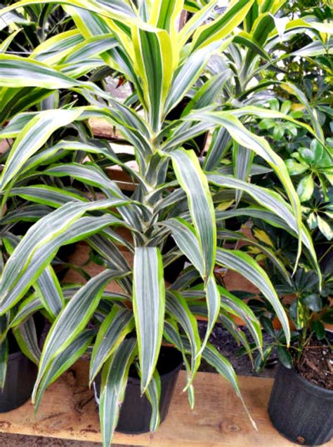 Low Light Indoor Plants  House Plants That Thrive In
