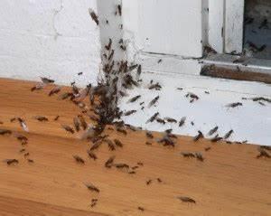 Ameisen Im Haus Ursache : ameisenfallen ungeziefer im haus ~ A.2002-acura-tl-radio.info Haus und Dekorationen