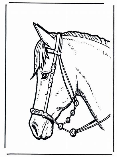 Horse Head Horses Funnycoloring Advertisement