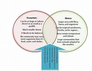 Rainforest And Desert Plants Venn Diagram